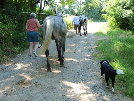 """VENDREDI 10 JUILLET - Atelier adultes : """"Balade méditative avec les chevaux"""""""