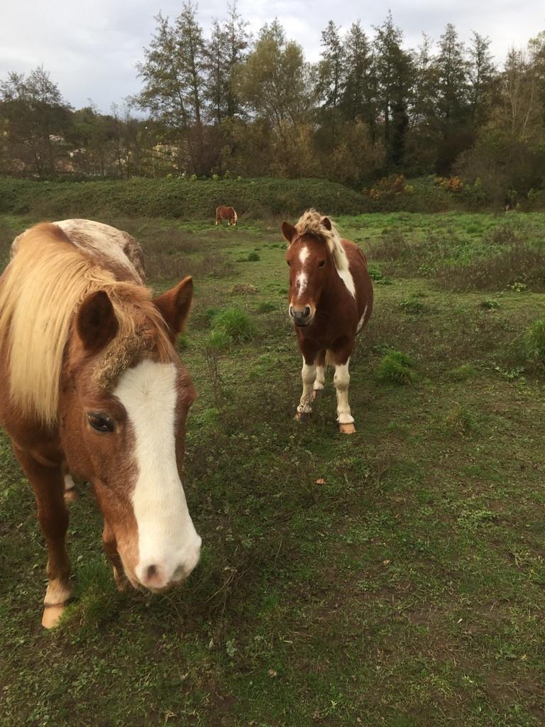 Les petits poneys ont besoin d'un coiffeur