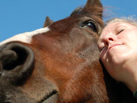 Equithérapie : Le cheval au secours des troubles psychologiques.