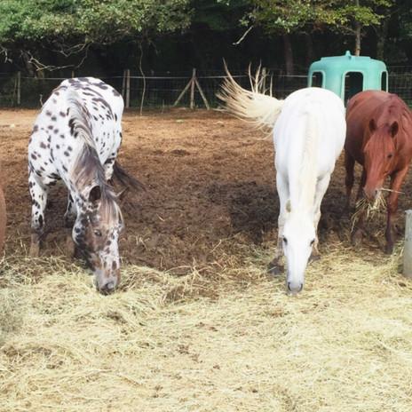 Les chevaux d'Equithérapie à Latresne