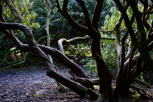 Location - Craig y Nos, Brecon Beacons National Park