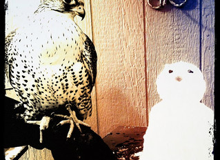 """Praise for """"American Sons: The Untold Story of the Falcon and the Snowman"""""""