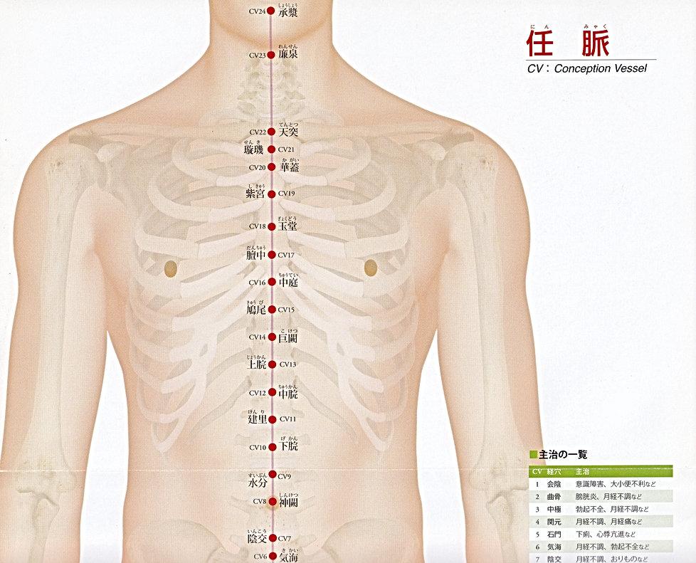 P37-1 任脈(にんみゃく).jpg