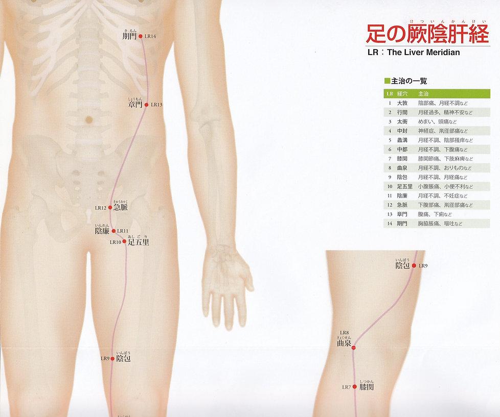 P33-1 足の厥陰肝経(けついんかんけい).jpg