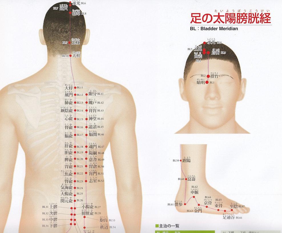 P23-1 足の太陽膀胱経(たいようぼうこうけい).jpg