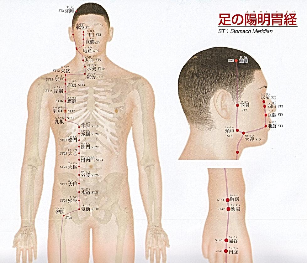 P15-1 足の陽明胃経(ようめいいけい).jpg