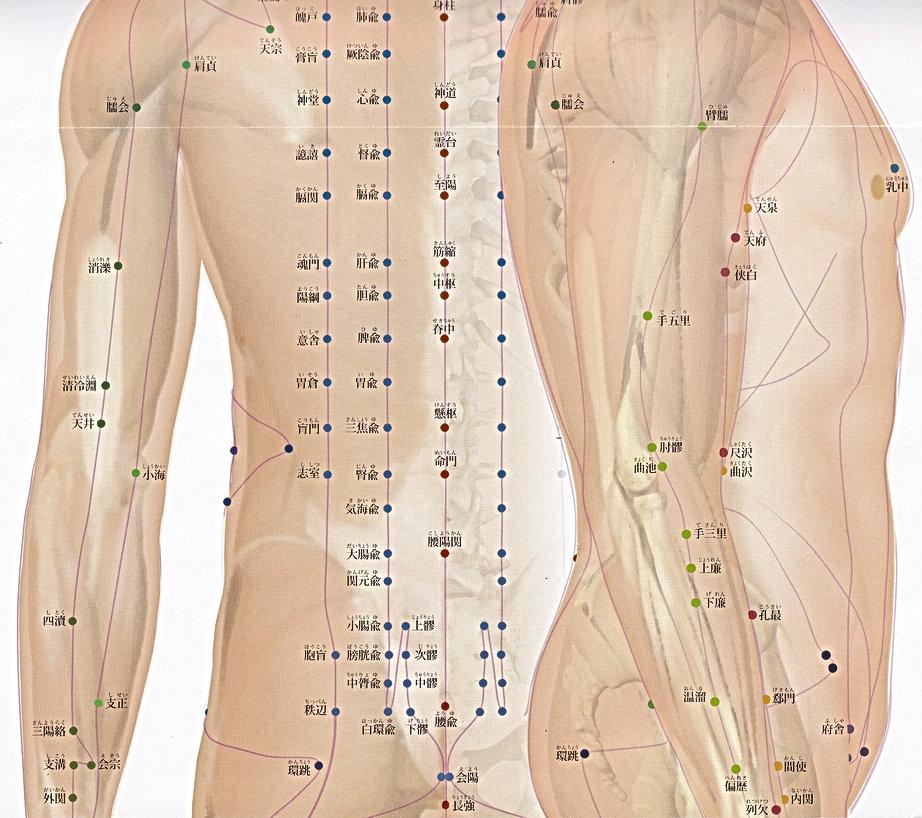 P7-2 全身の経脈・経穴(背面・側面 腹部).jpg