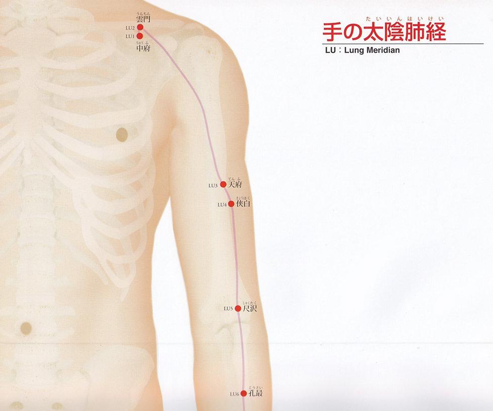 P11 -1 手の太陰肺経(たいいんはいけい).jpg