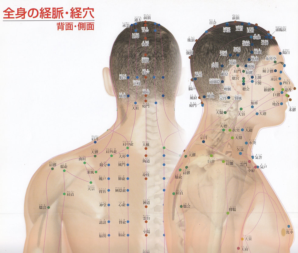 P7-1 全身の経脈・経穴(背面・側面 頭部胸部).jpg