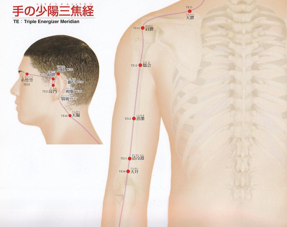 P29-1 手の少陽三焦経(しょうようさんしょうけい).jpg