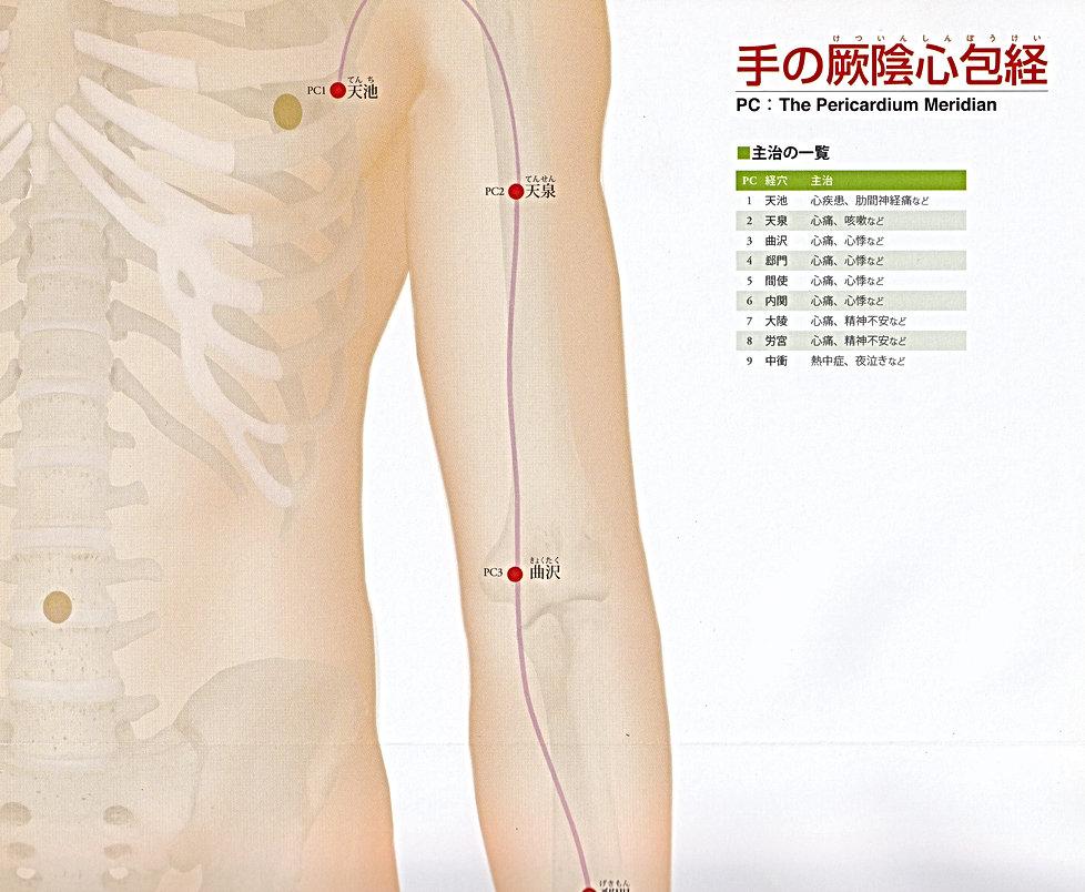 P27-1 手の厥陰心包経(けついんしんぽうけい).jpg