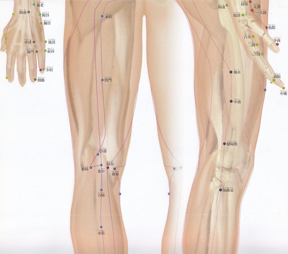 P7-3 全身の経脈・経穴(背面・側面 大腿部).jpg