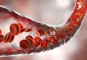 健康な血液循環の重要性