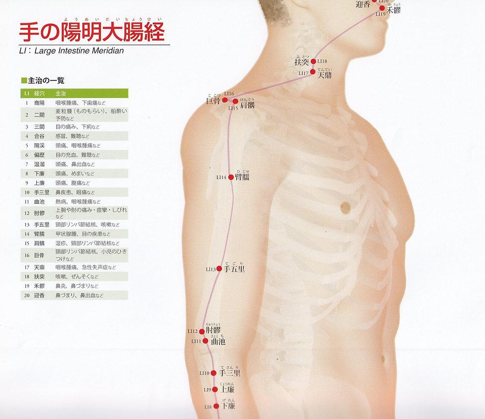 P13-1 手の陽明大腸経(ようめいだいちょうけい).jpg