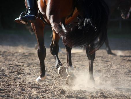 Entries open for the I.C.E Horseboxes All England Dressage Festival