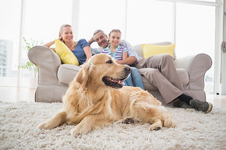 family-dog-home.jpg