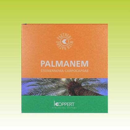 Traitement du palmier