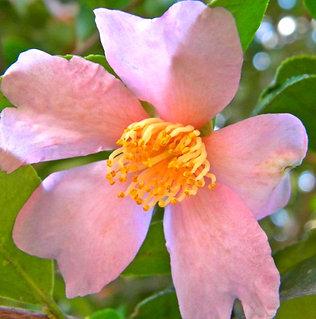 Jardinerie nova, votre jardinerie à Opio dans les alpes ...