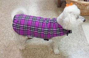 dogincoat2.jpg