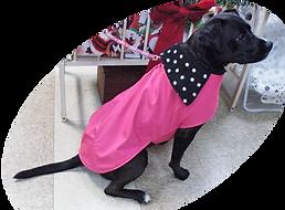 dogincoat3a.png