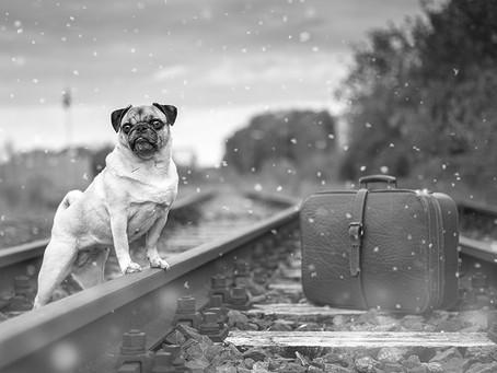 Провоз животных в поезде