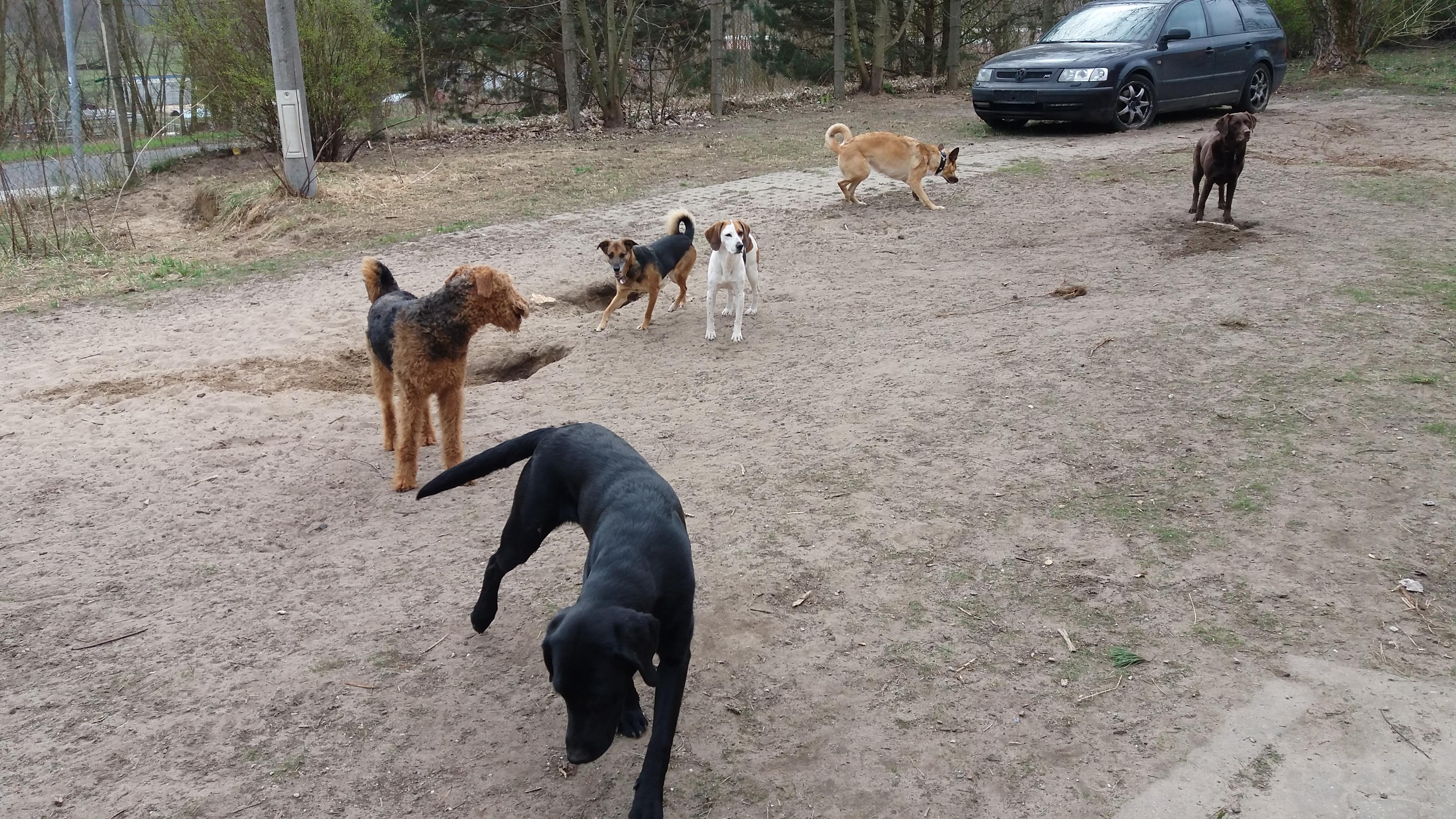 Spielende Hundis