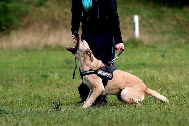 Sandy Hutchinson, Hundetrainerin