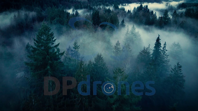 FOREST | STOCK FOOTAGE