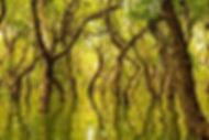 web-vietnam-landscape-best-water-forest-
