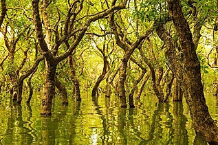 web-vietnam-landscape-best-water-forest-