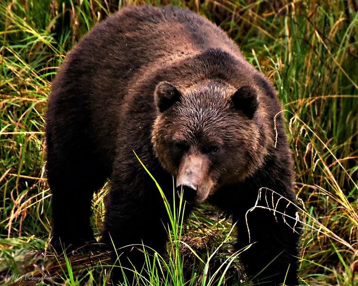 2018 Valdez Bear