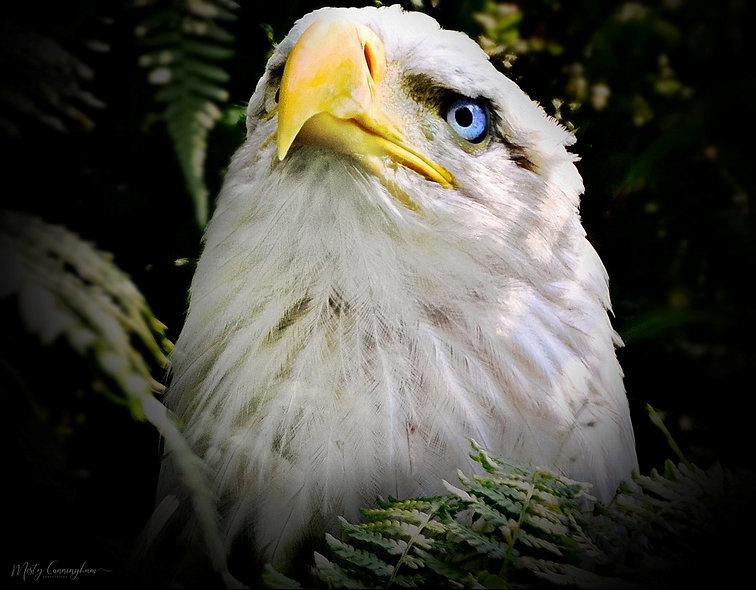 Ak Eagle 1