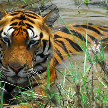 המצעד - 5 שמורות טבע מומלצות בהודו