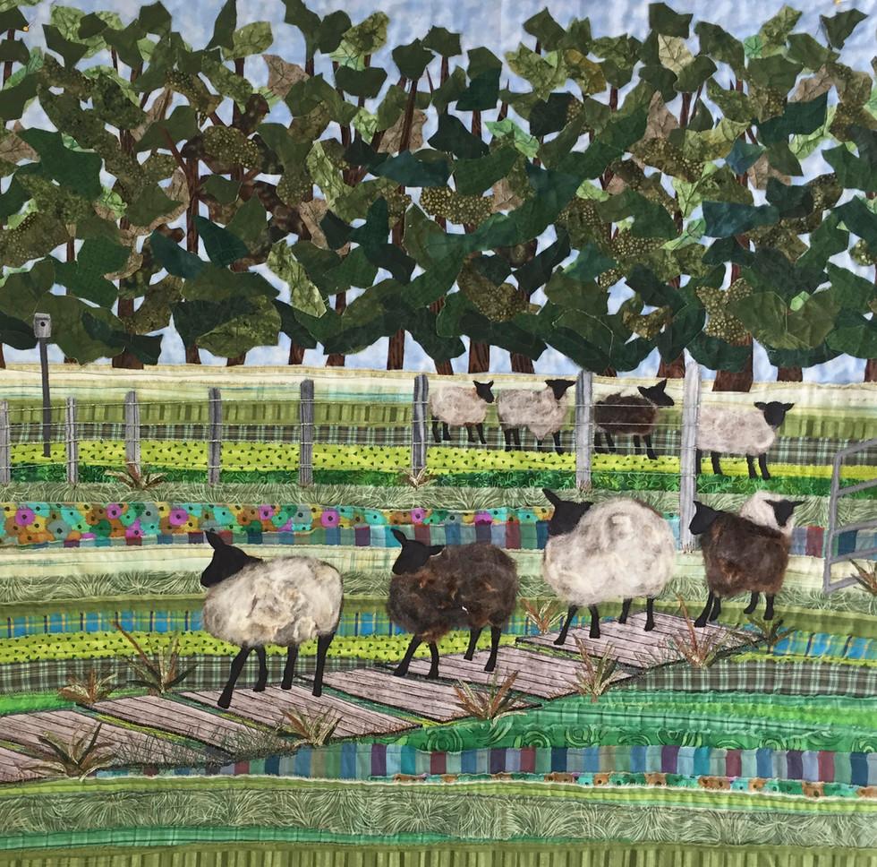 Ellen's Lambs