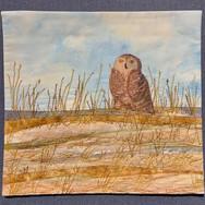 Snowy Owl on Smith Point