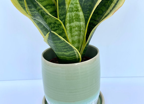 Emerald green and white plant pot