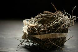 grandaddy's nest