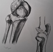 Knee Bones
