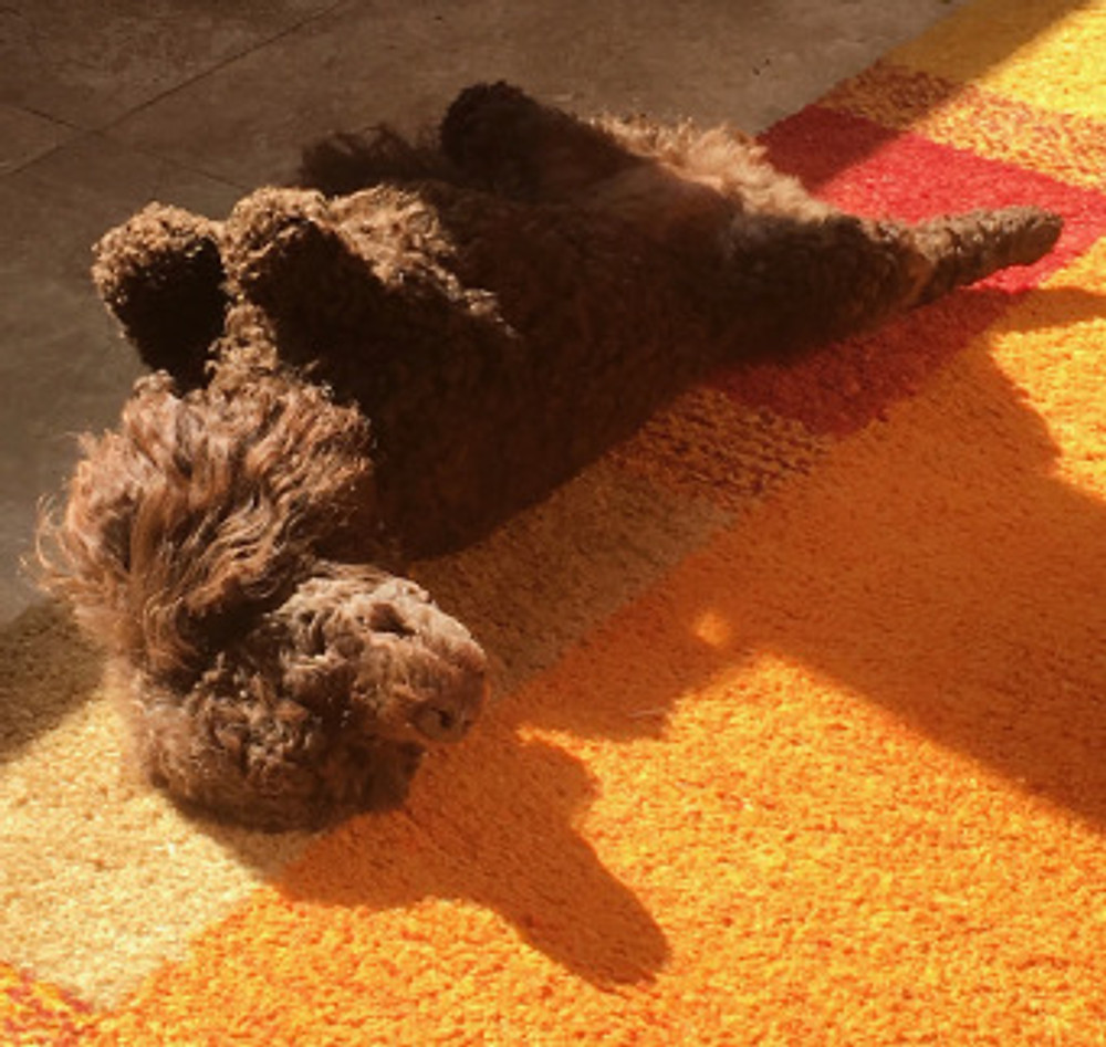 Piper sunbathing 2.jpg