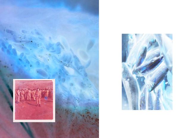 metempsicosi plastica2.jpg