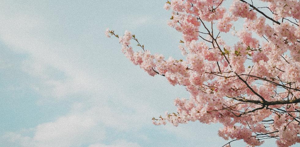 Spring_edited_edited_edited.jpg