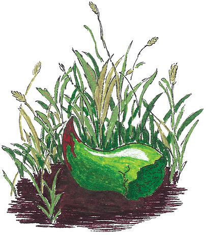 Horn%26Grass%20color_edited.png
