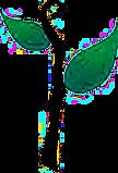 brote verde2 (1).png