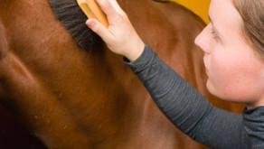 Horses Are Therapeutic.