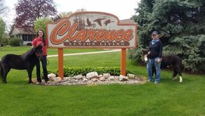 Minis Visit Clarence Senior Living!
