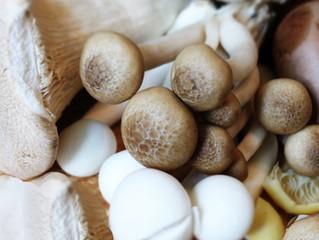 First Recipe - Mushroom Soup
