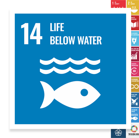 Localising the SDGs: Life Below Water