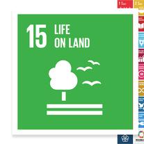 Localising the SDGs: Life on Land