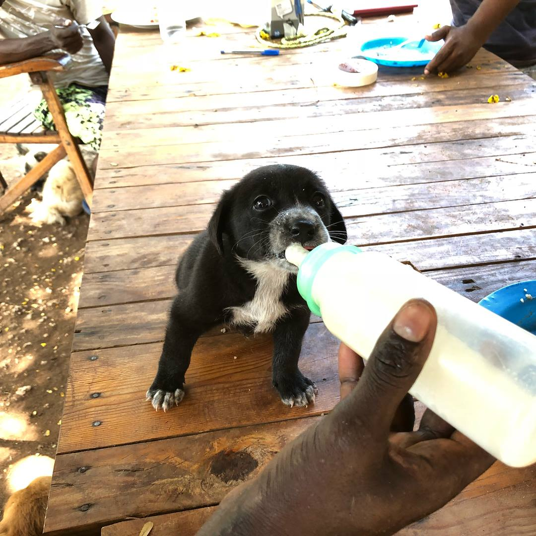 Rescued Puppy Bottle Feeding