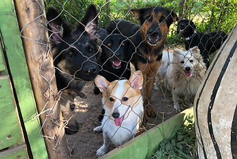 Dog Kennelling Dar Es Salaam